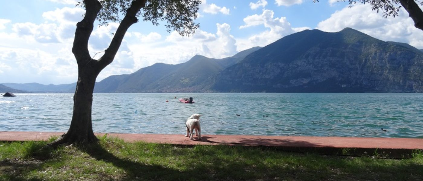 Ducks in Betsy! (The road to Iseo)