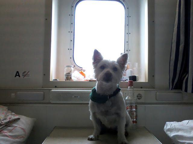 Poppy the westie posing at a port hole in the dog friendly cabin on the north sea ferry