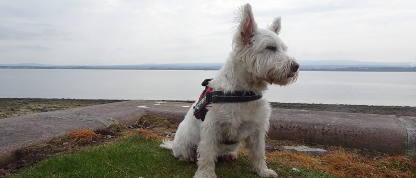 Watching for sea monsters on the Black Isle