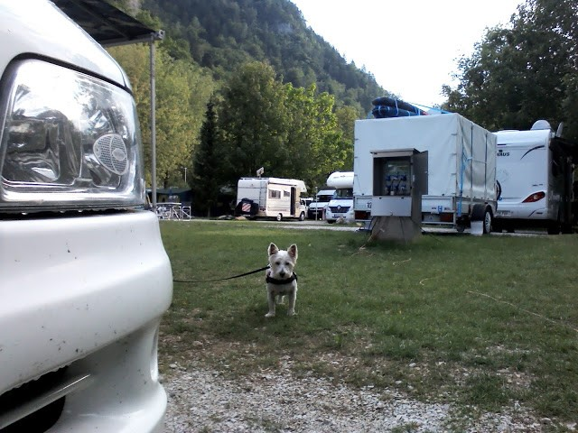 poppy the westie in the lake Bled Campsite