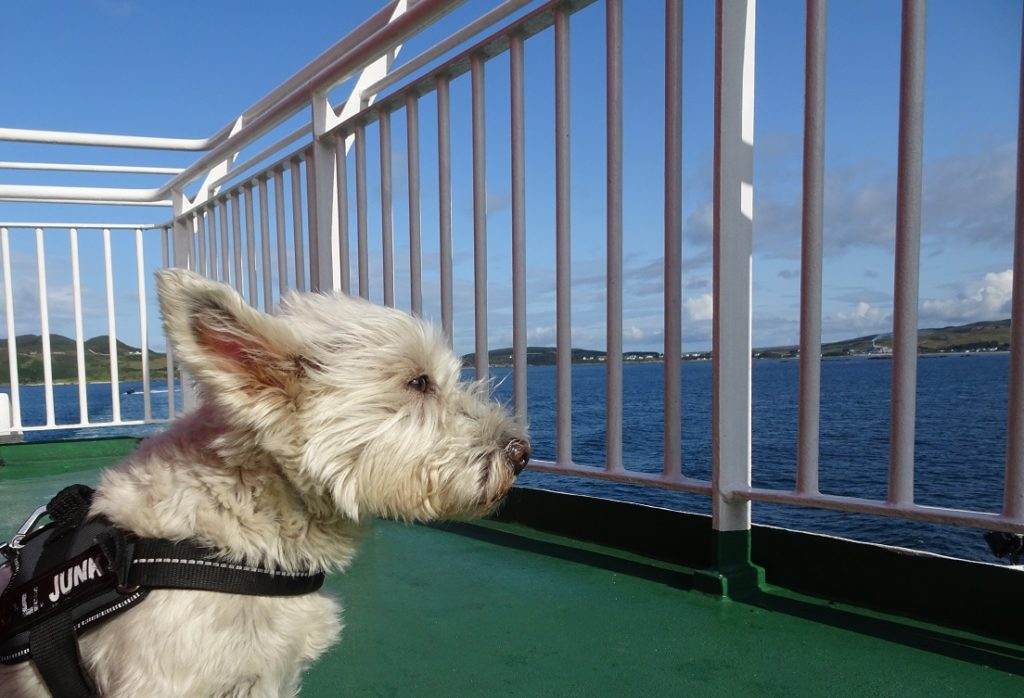 Poppysocks on the Islay Ferry deck