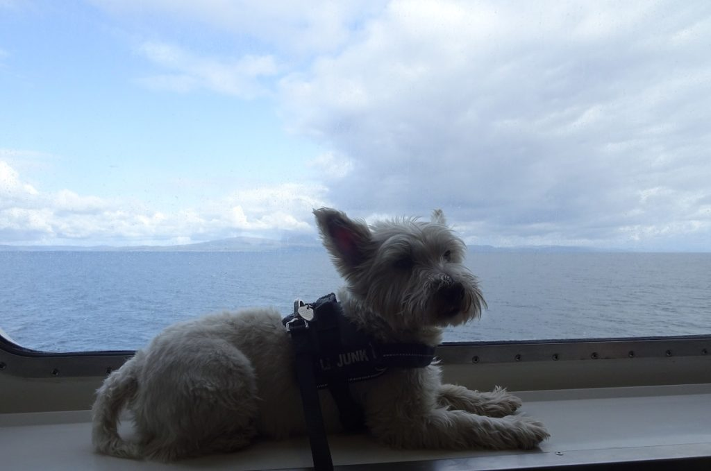 poppy the westie on the ferry window with Jura in the distance