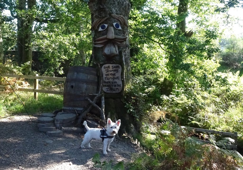 poppy the westie in the fairy glen Luss
