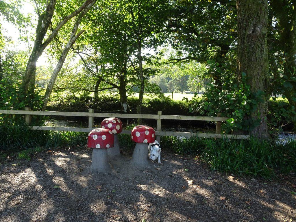poppysocks investigating toadstools