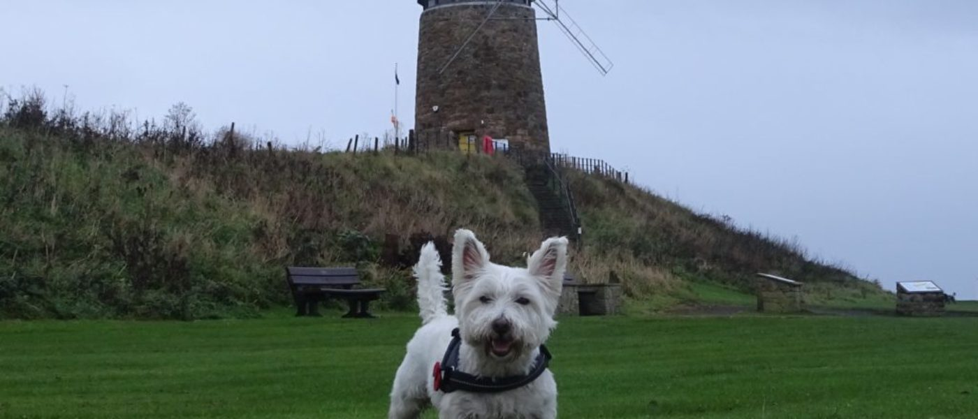 Poppy goes to St Monans