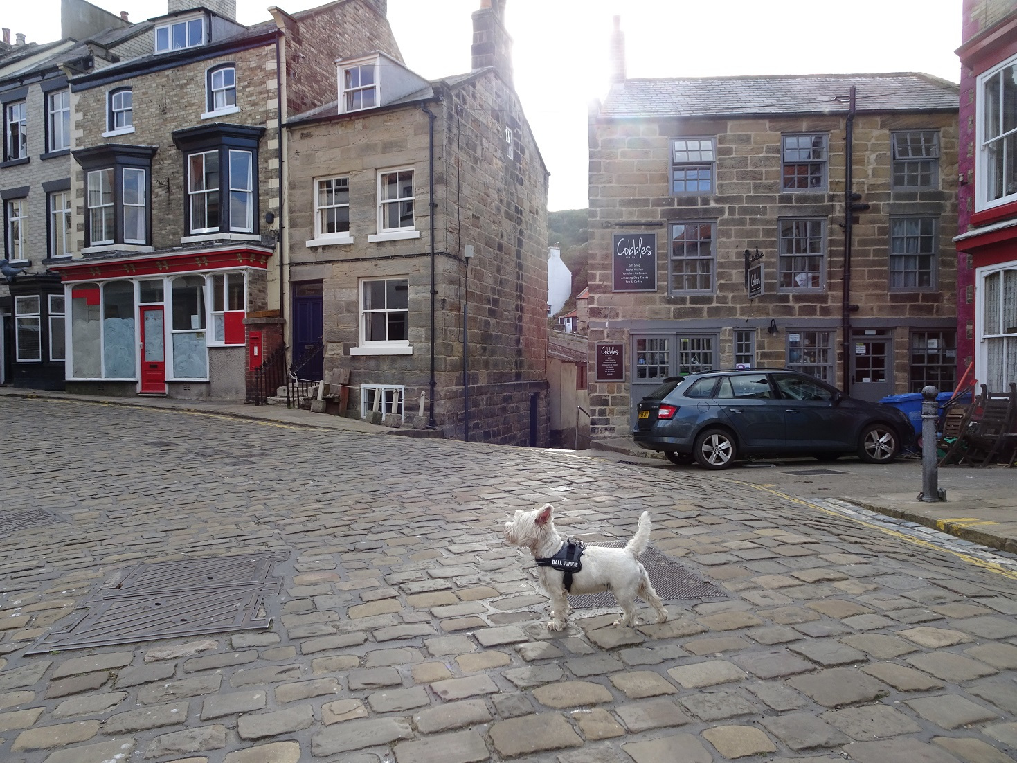 poppy the westie Staithes Square