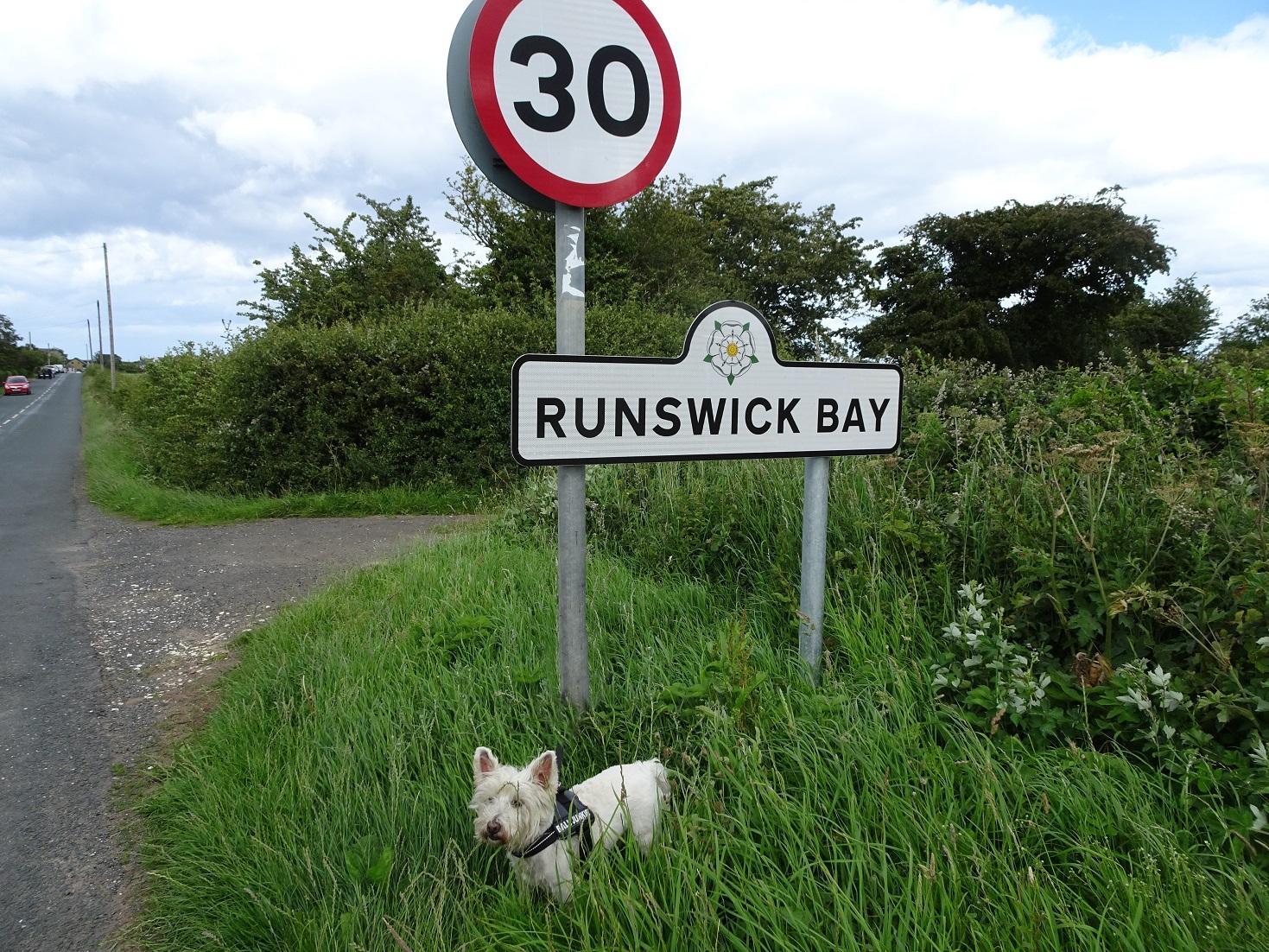 poppy the westie at start of runswick bay