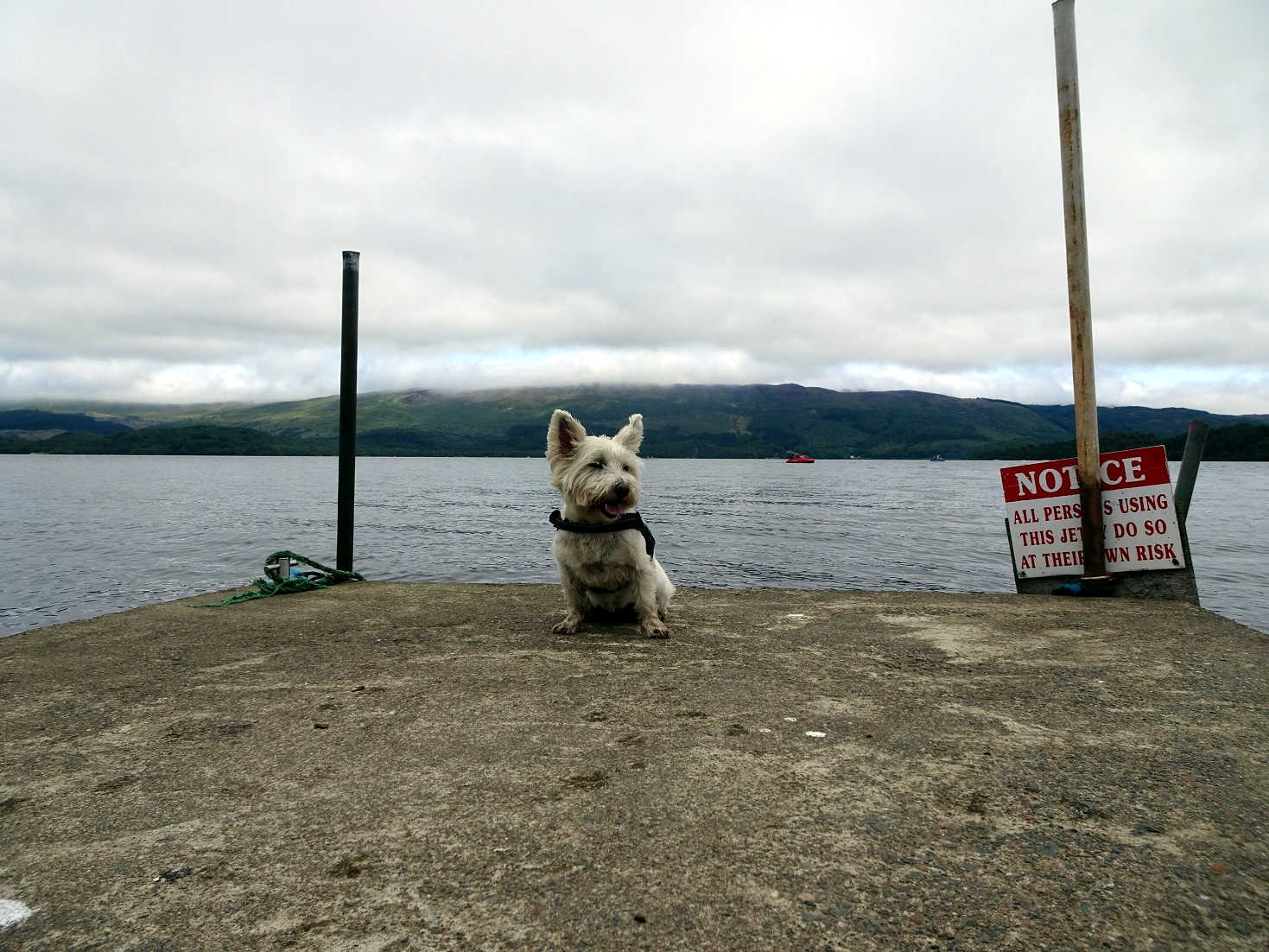 Poppy the westie on the wee jetty at Luss