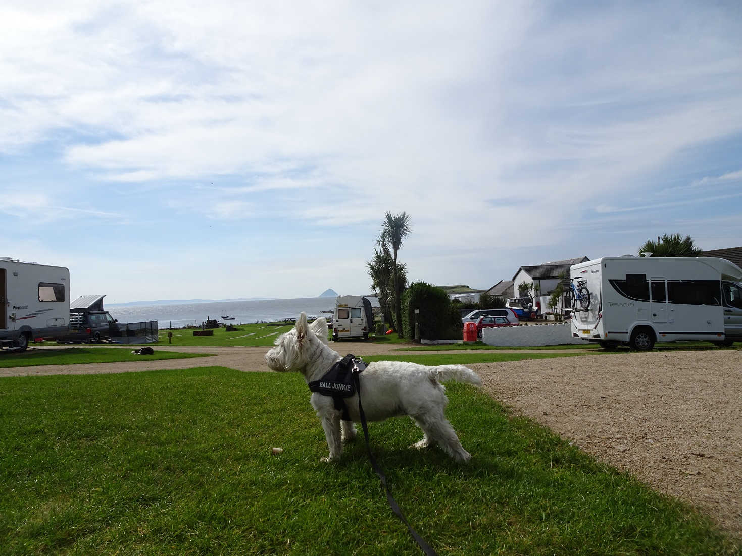 poppy the westie and empty seal shore camp site