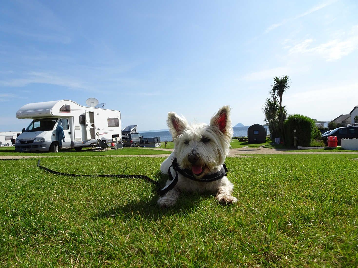 poppy the westie back in camp in time for football