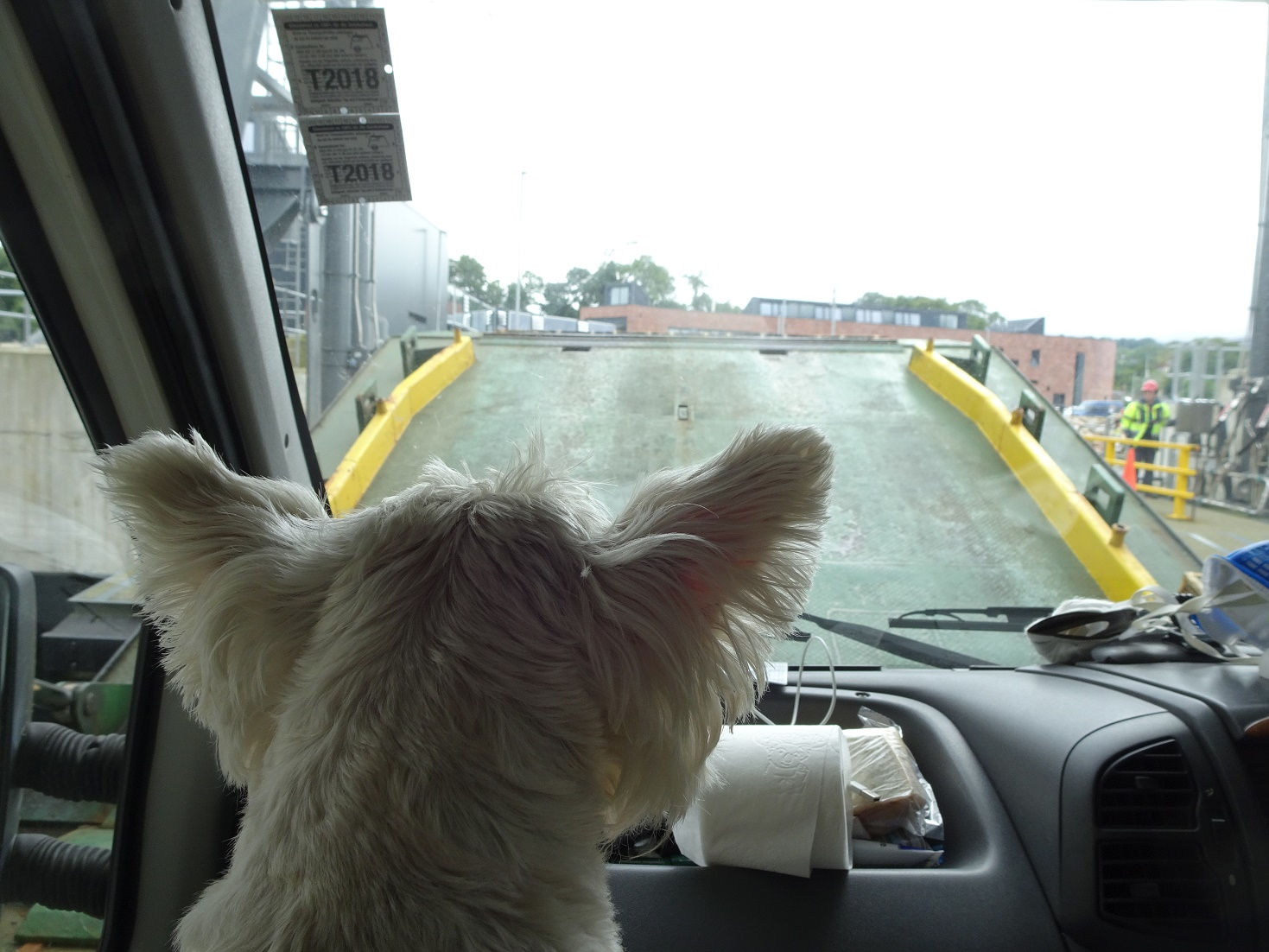 poppy the westie watching the ferry door open