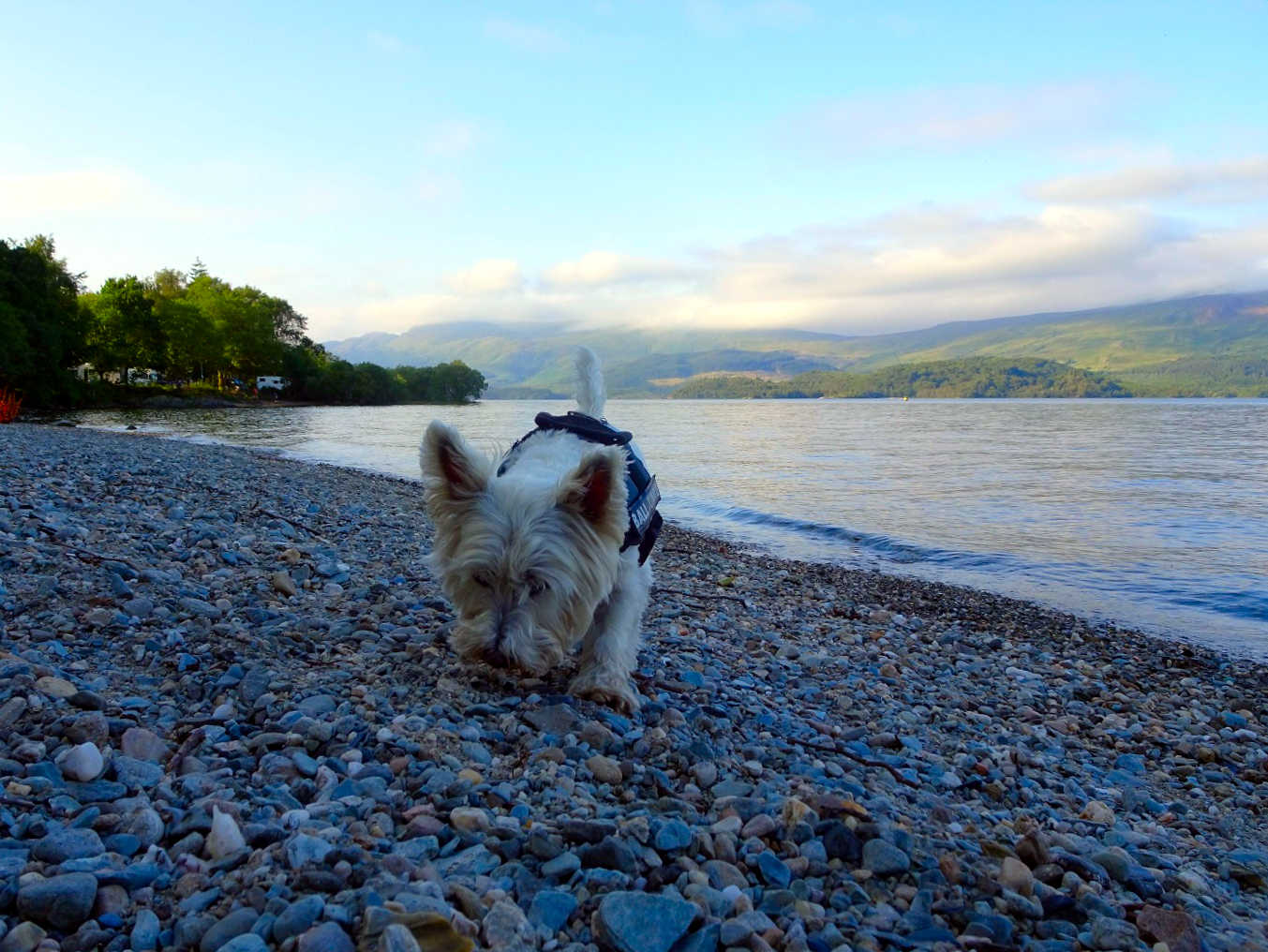 poppysocks sniffs out critters at Loch Lommond
