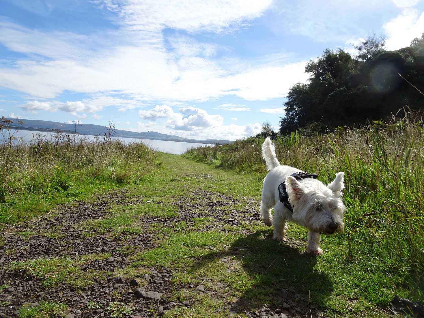 poppy sniffing out frogs on the west island way