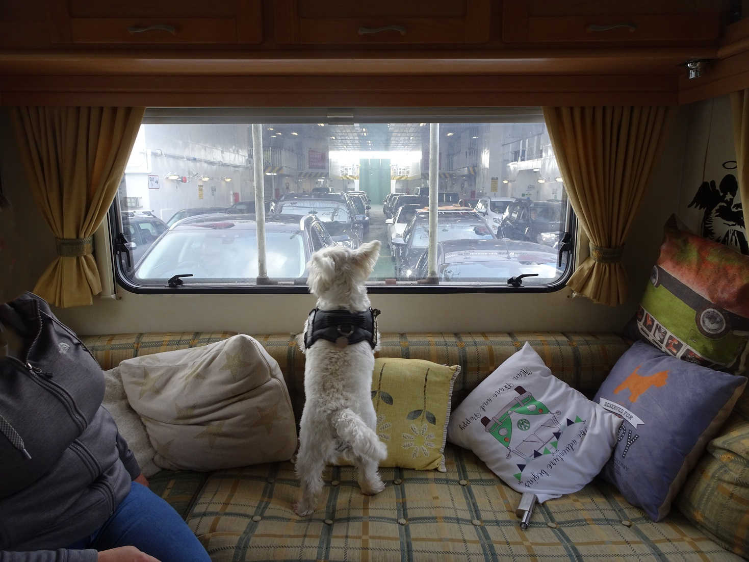 poppy the westie on the bute ferry