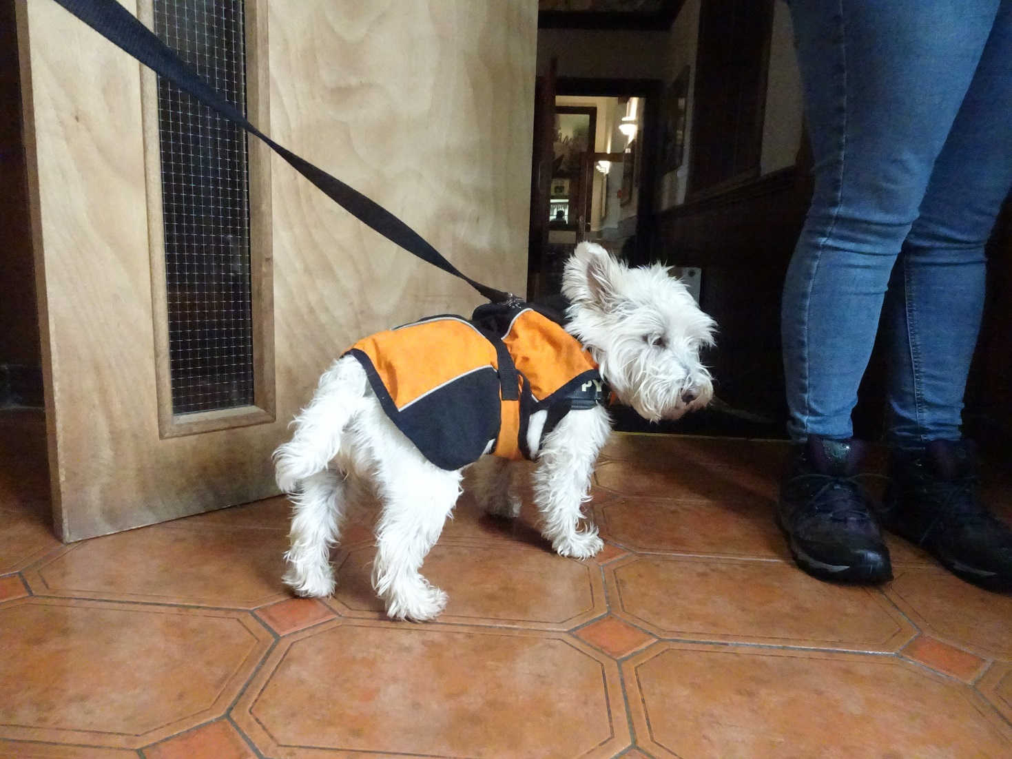 poppy the westie at the Kilchoan hotel
