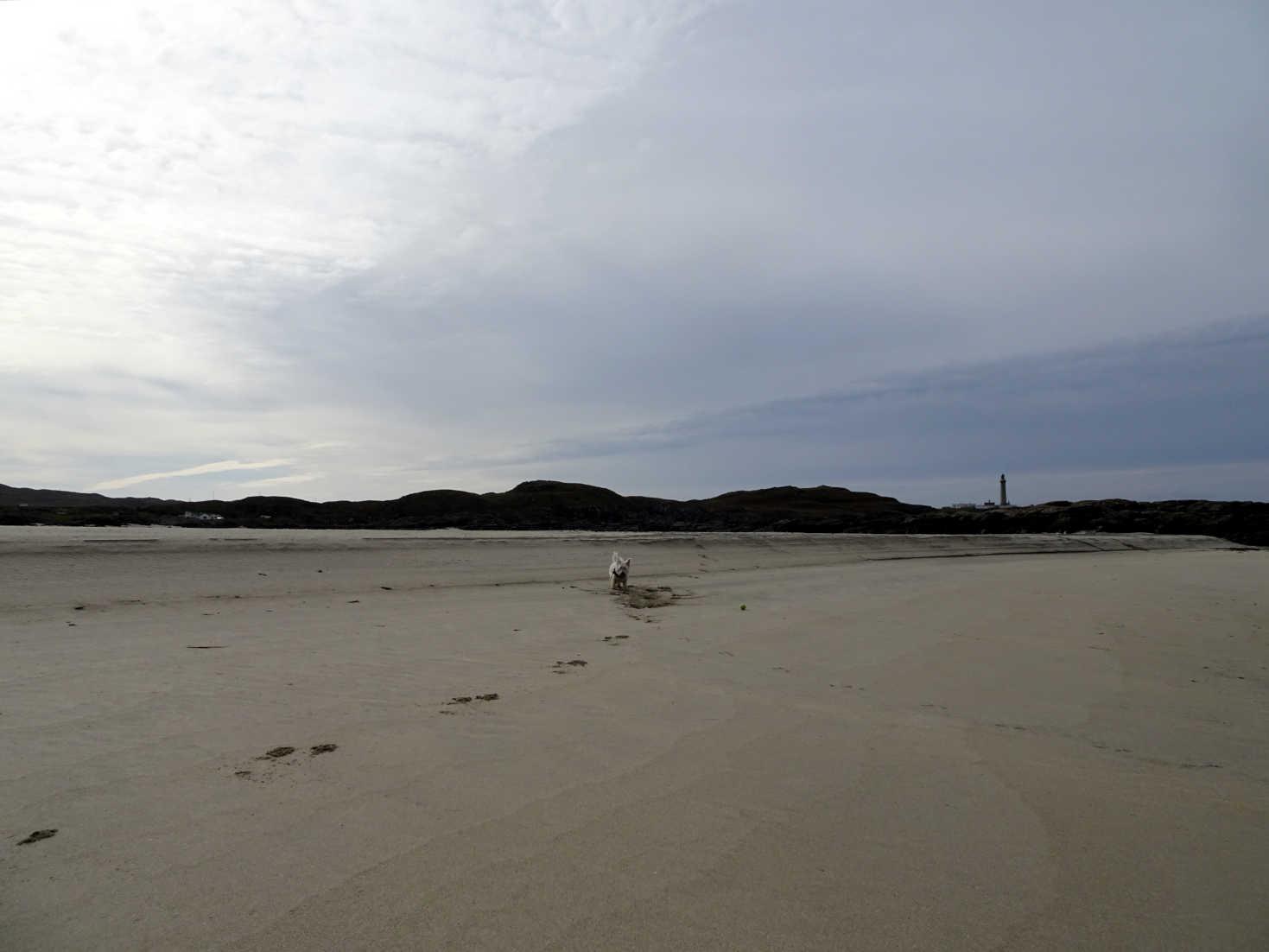 poppy the westy on virgin sands at MacNeil's Beach