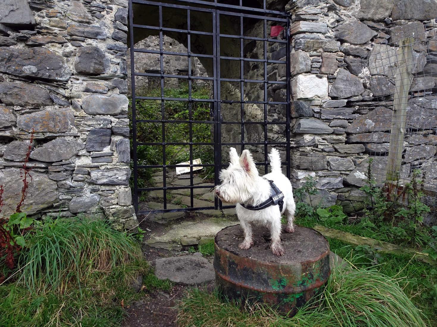 poppysocks at Castle Tioram