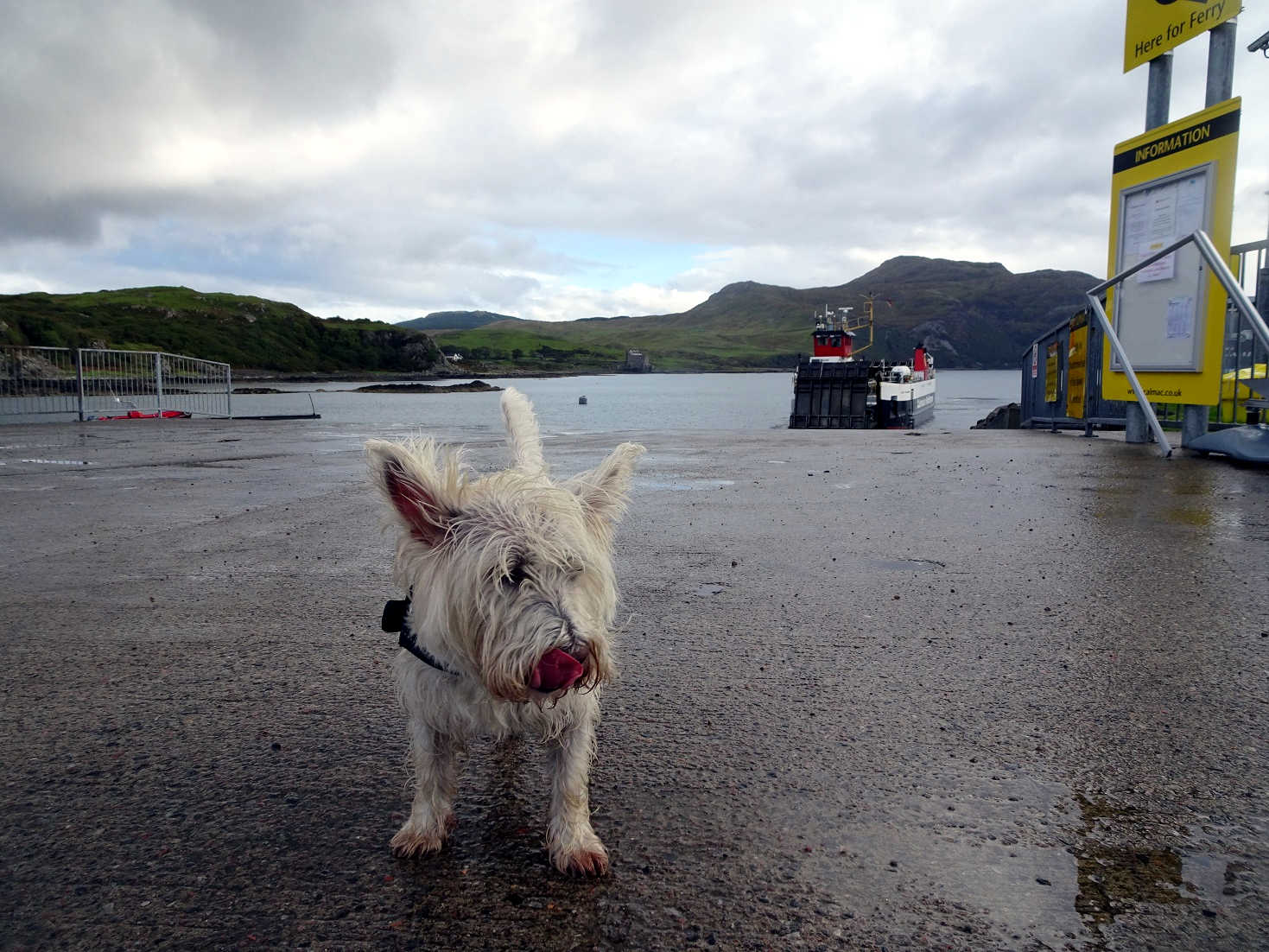 poppysocks waiting at Kilchoan for the mull ferry