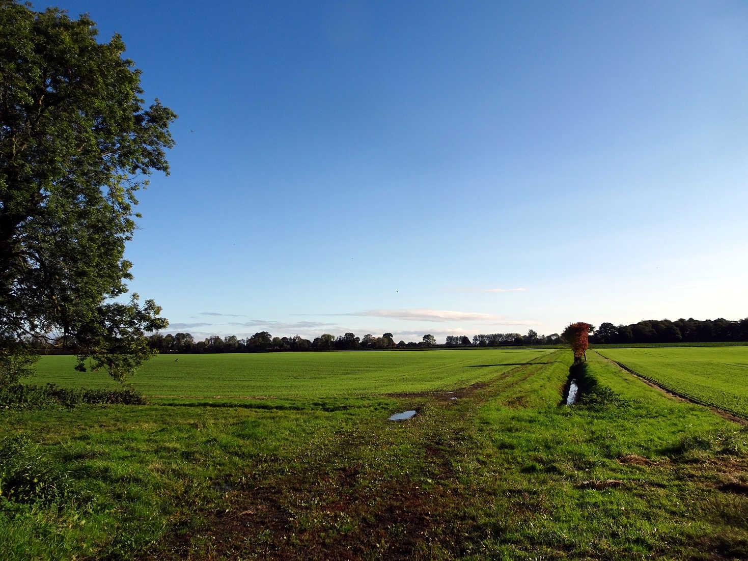 Fields outside Nayburn