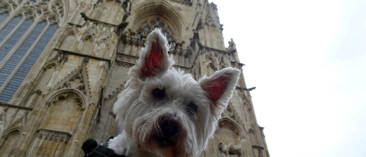 Poppy goes to York