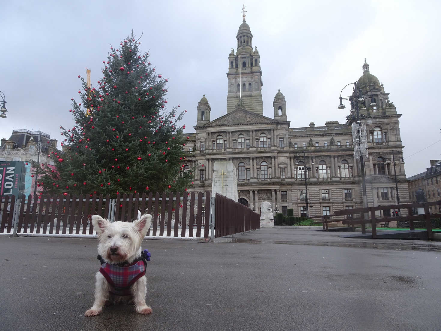 poppy the westie in front of the chambers