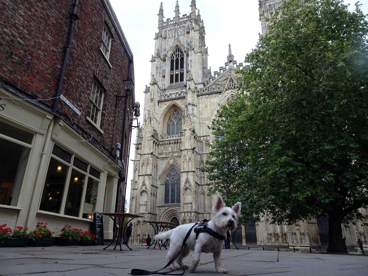poppysocks in York