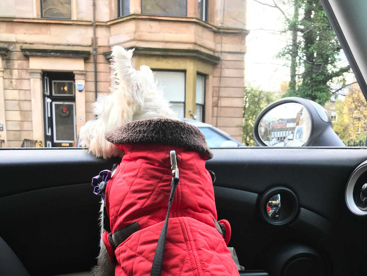 poppy the westie in the west end