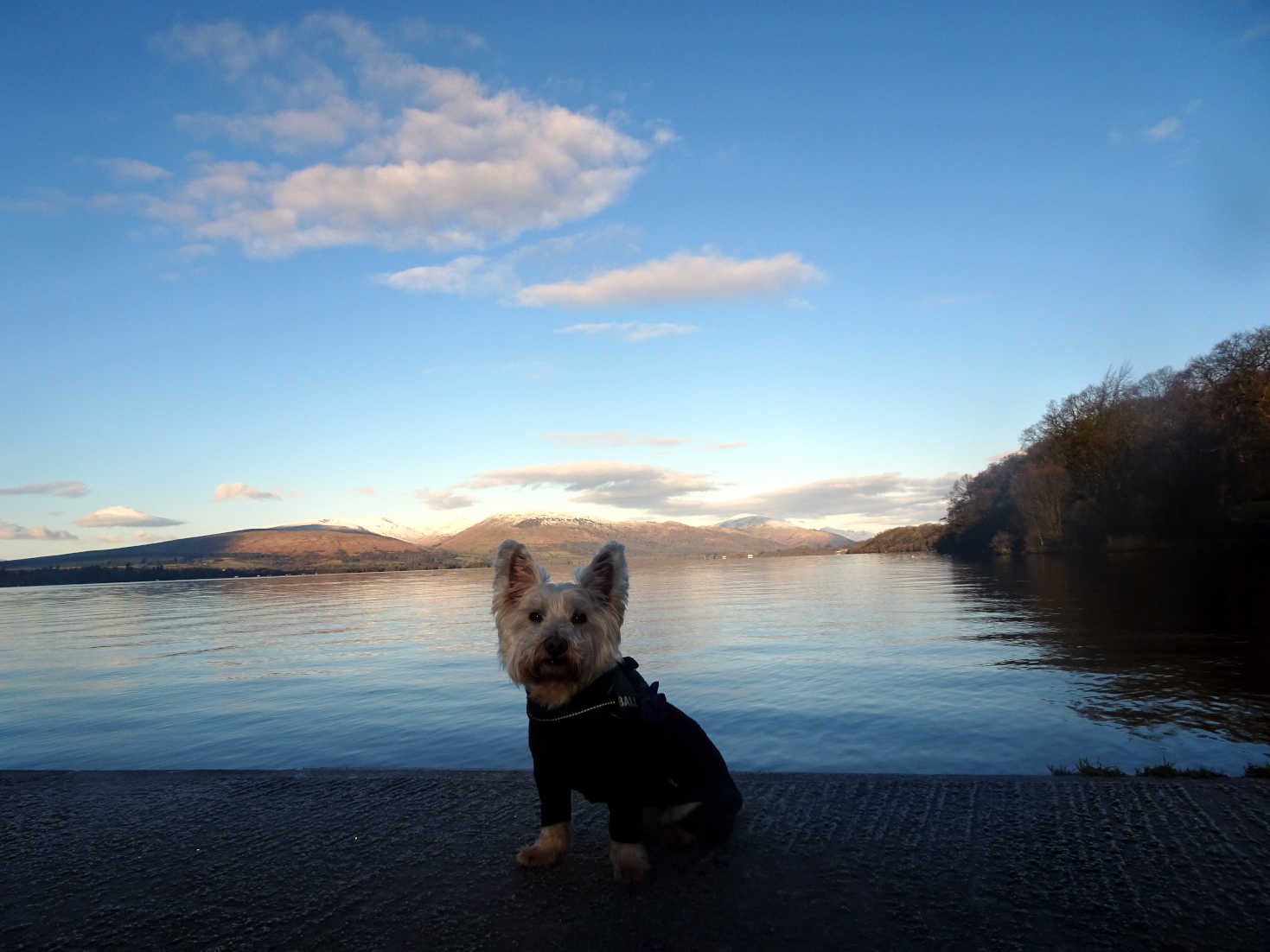 poppy the westie on jetty at balloch