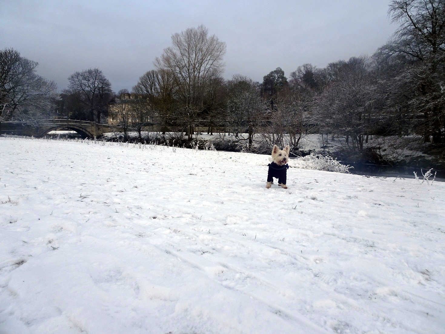 poppysocks at pollock park in the snow