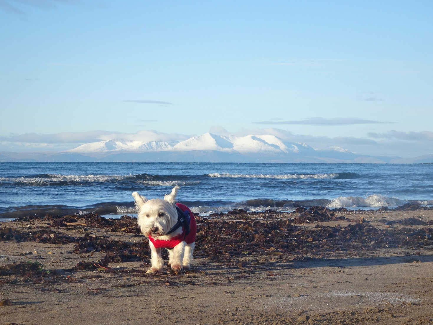 poppysocks at troon with snowy arran over the water