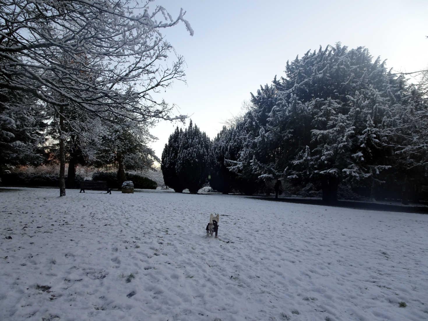 poppysocks hunting in the snow