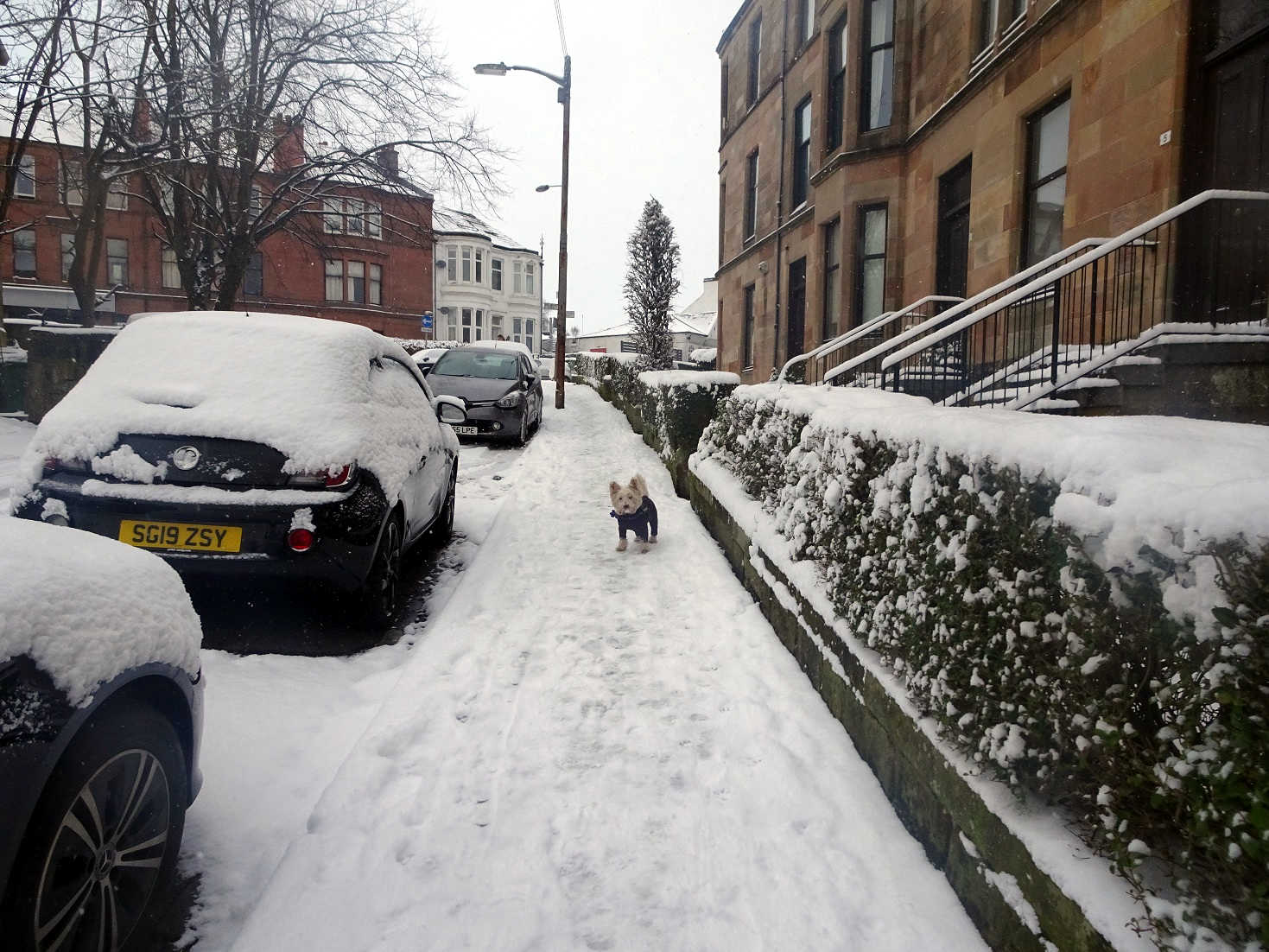 poppy the westie and a snowy walk on cathkin road
