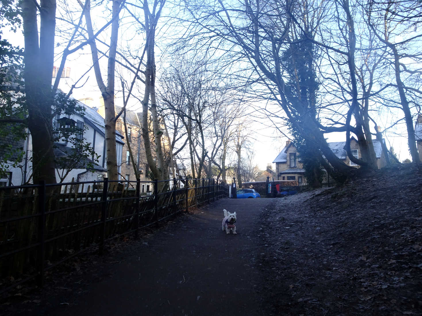 poppy the westie leaving the park at old snuff mill