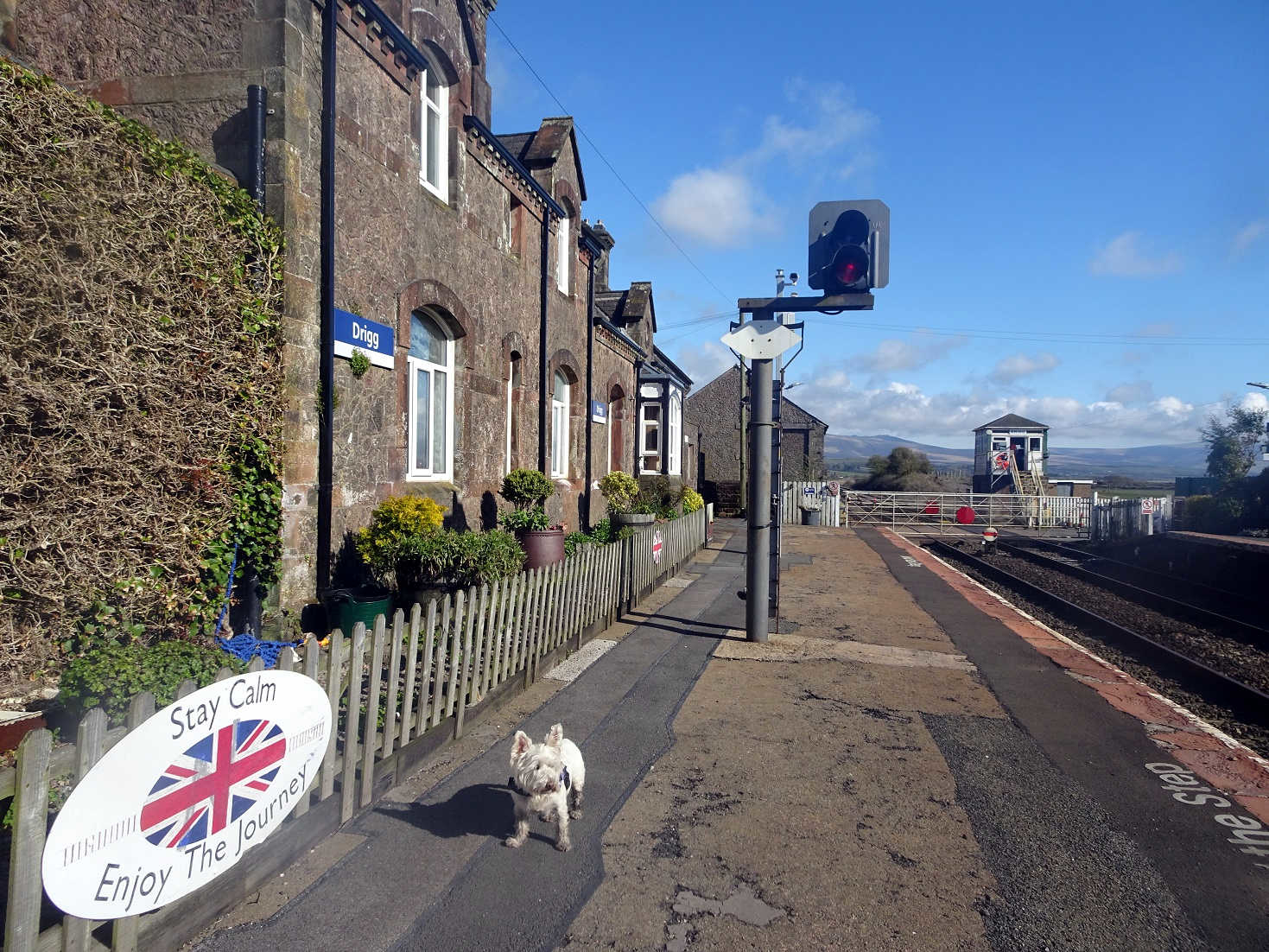 poppy the westie at drigg station