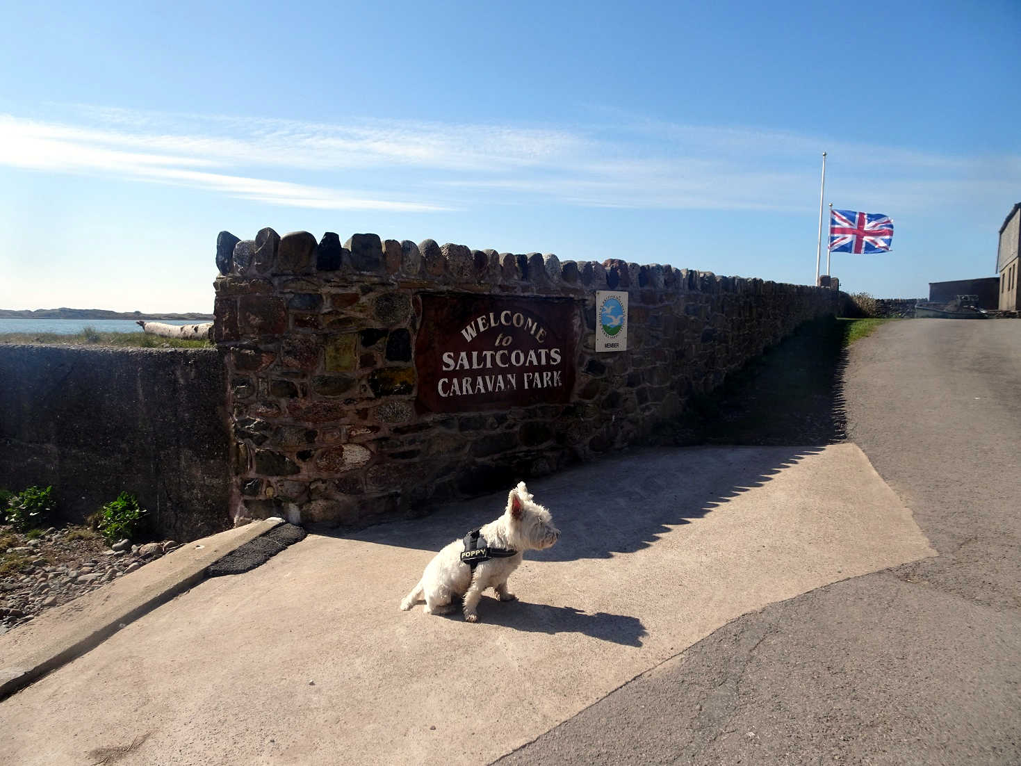 poppy the westie this is not saltcoats