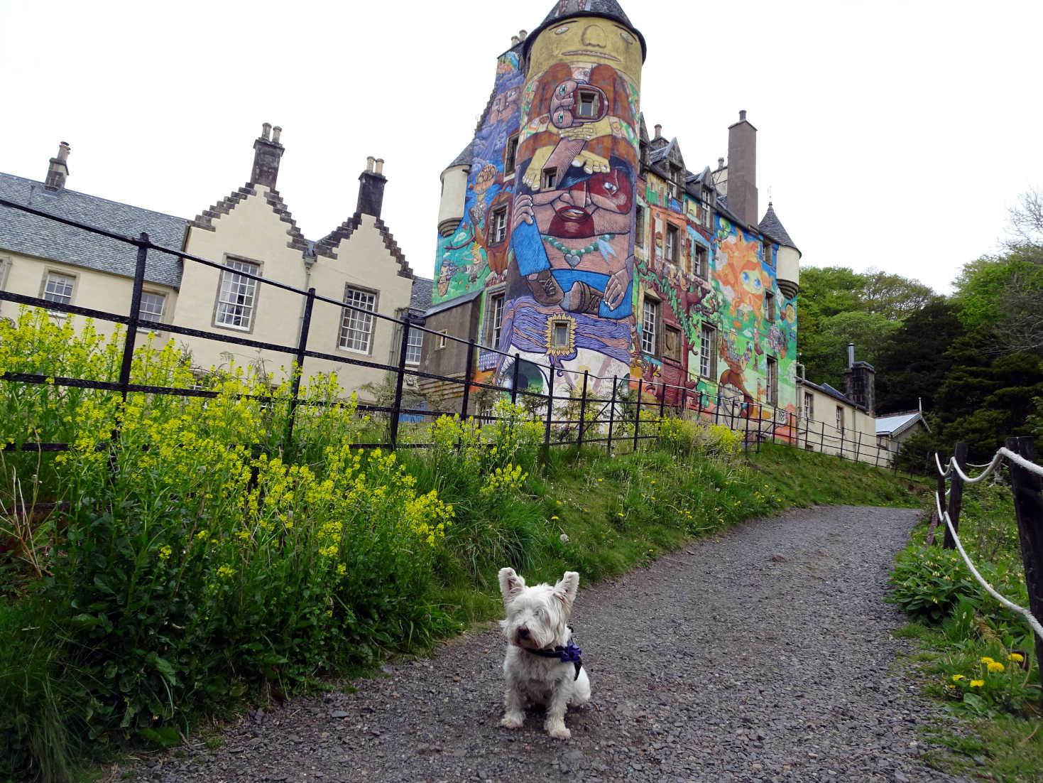 poppy the westie beside Kelburn Castle