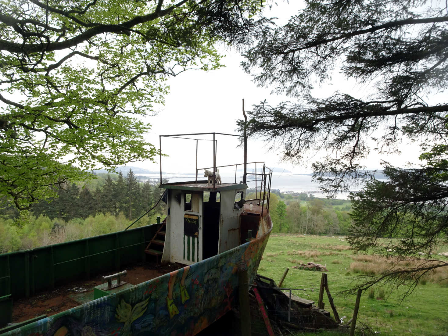 poppy the westie on top of a boat in the forrest
