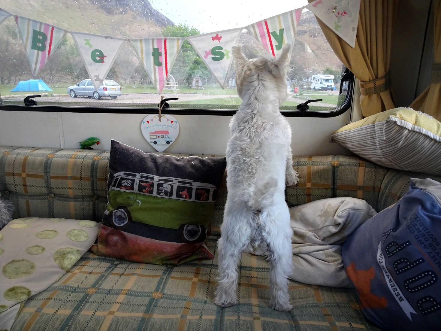 poppy the westie survays lochranza camp site