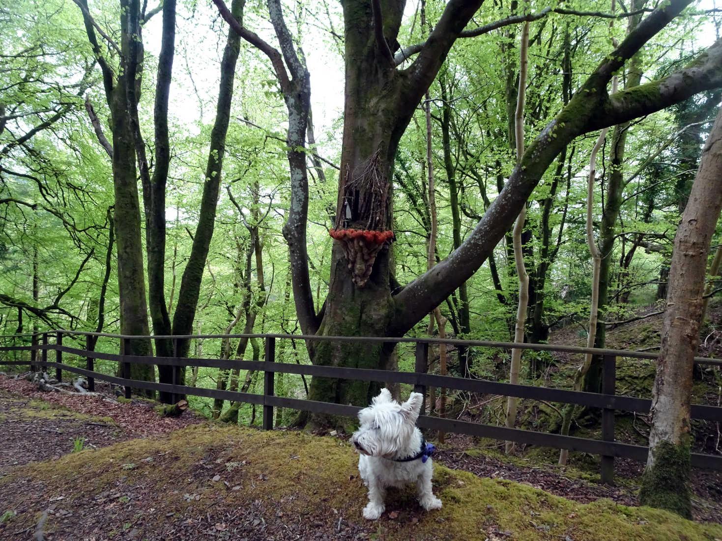 poppysocks at fairy encampment Kelburn Castle