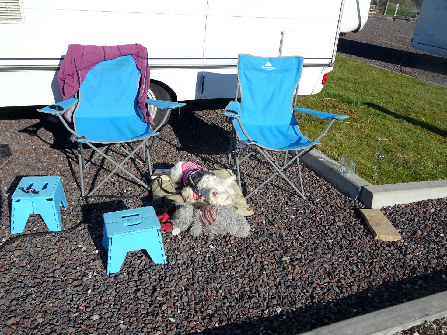 Poppy the westie back at base Portavadie Marina