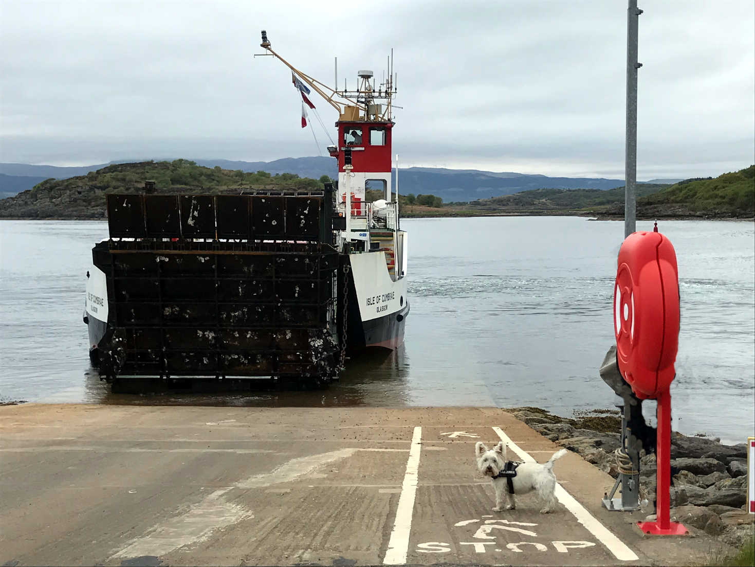 poppy the westie as ferry comes in Portavadie