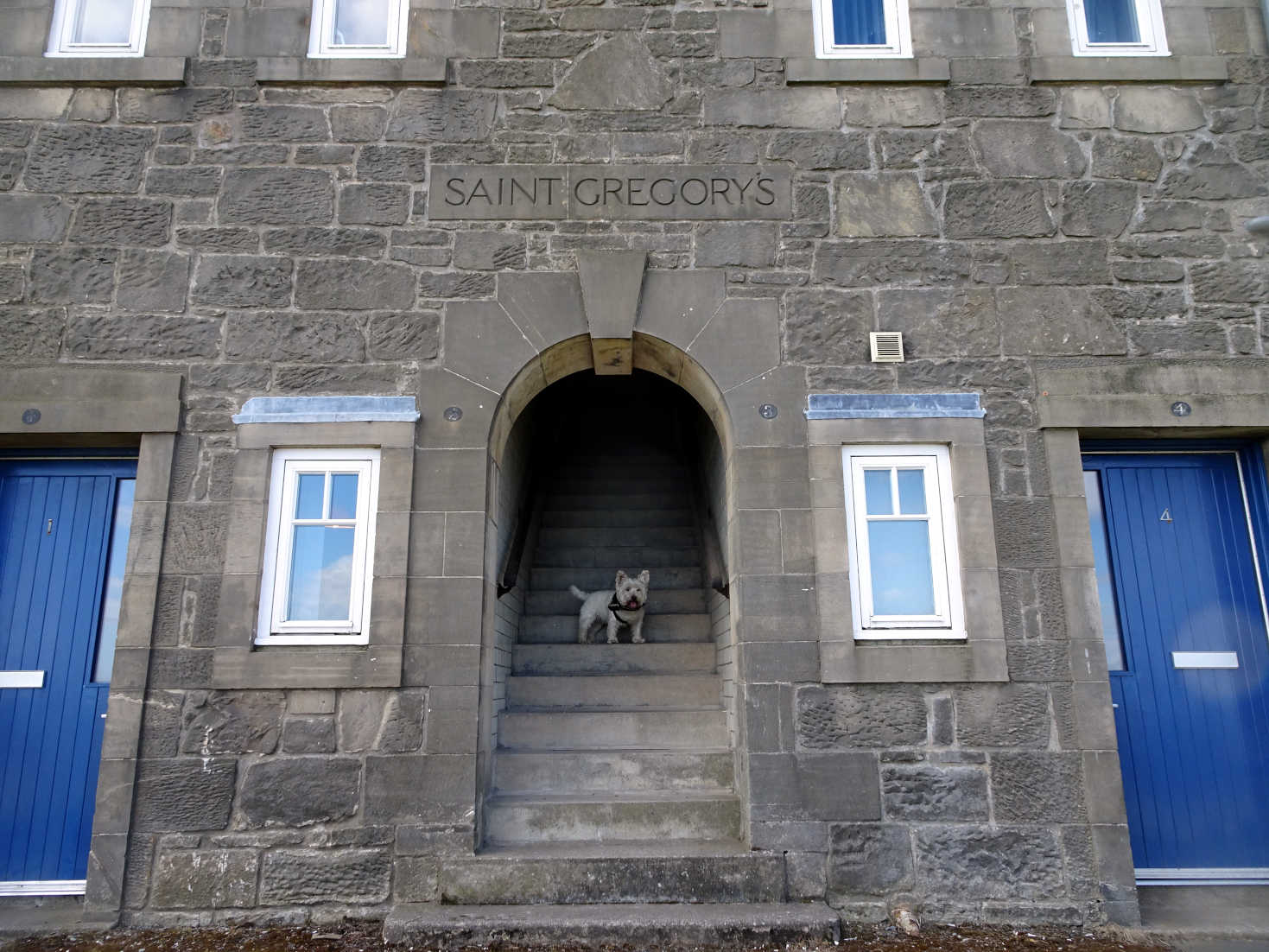 poppy the westie at St Gregorys St Andrews