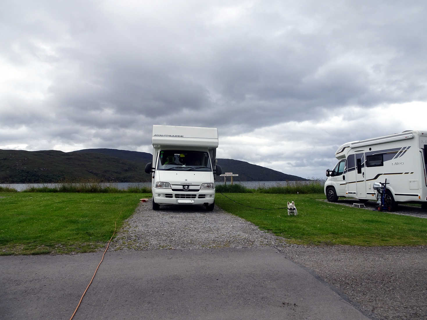 Poppy the westie and Betsy at Ullapool Campsite