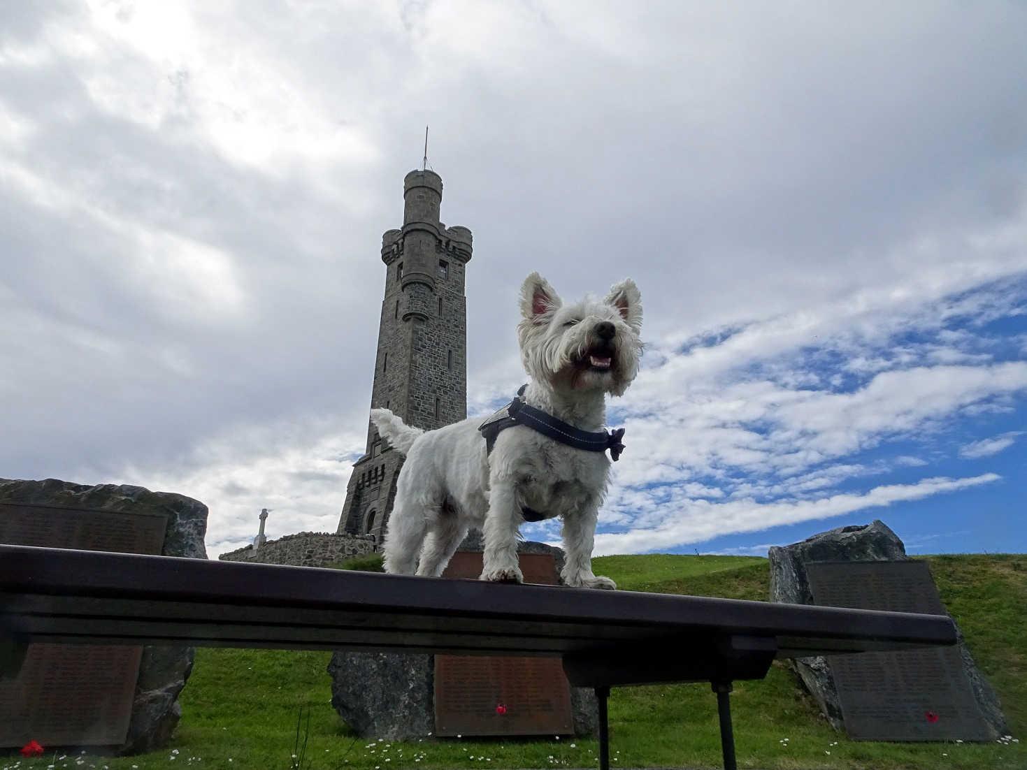 Poppy the westie at the war memorial Stornaway