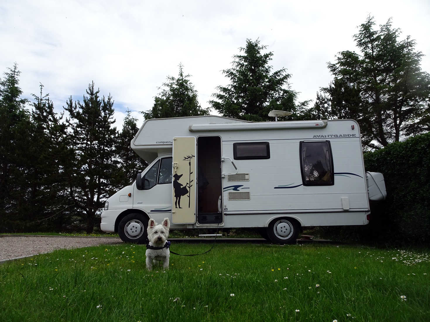 poppy the westie and betsy at Stornaway campsite