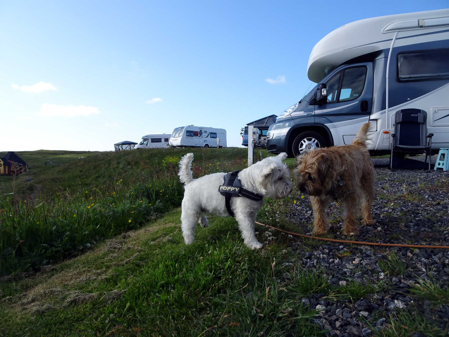 poppy the westie and jack in north uist