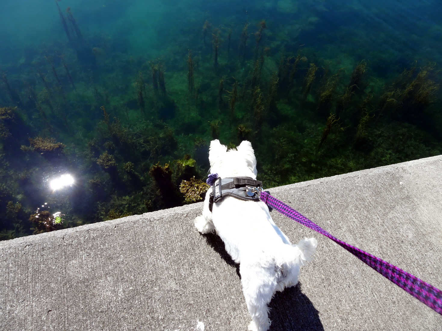 poppy the westie and seaweed monsters