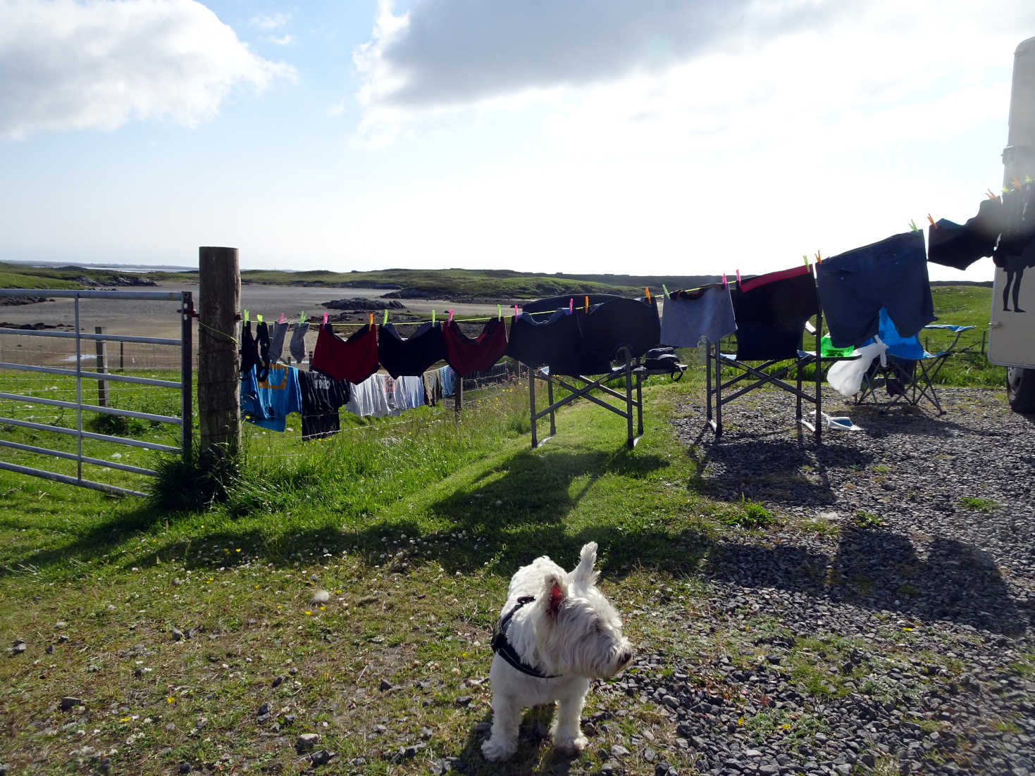 poppy the westie and washing in north uist
