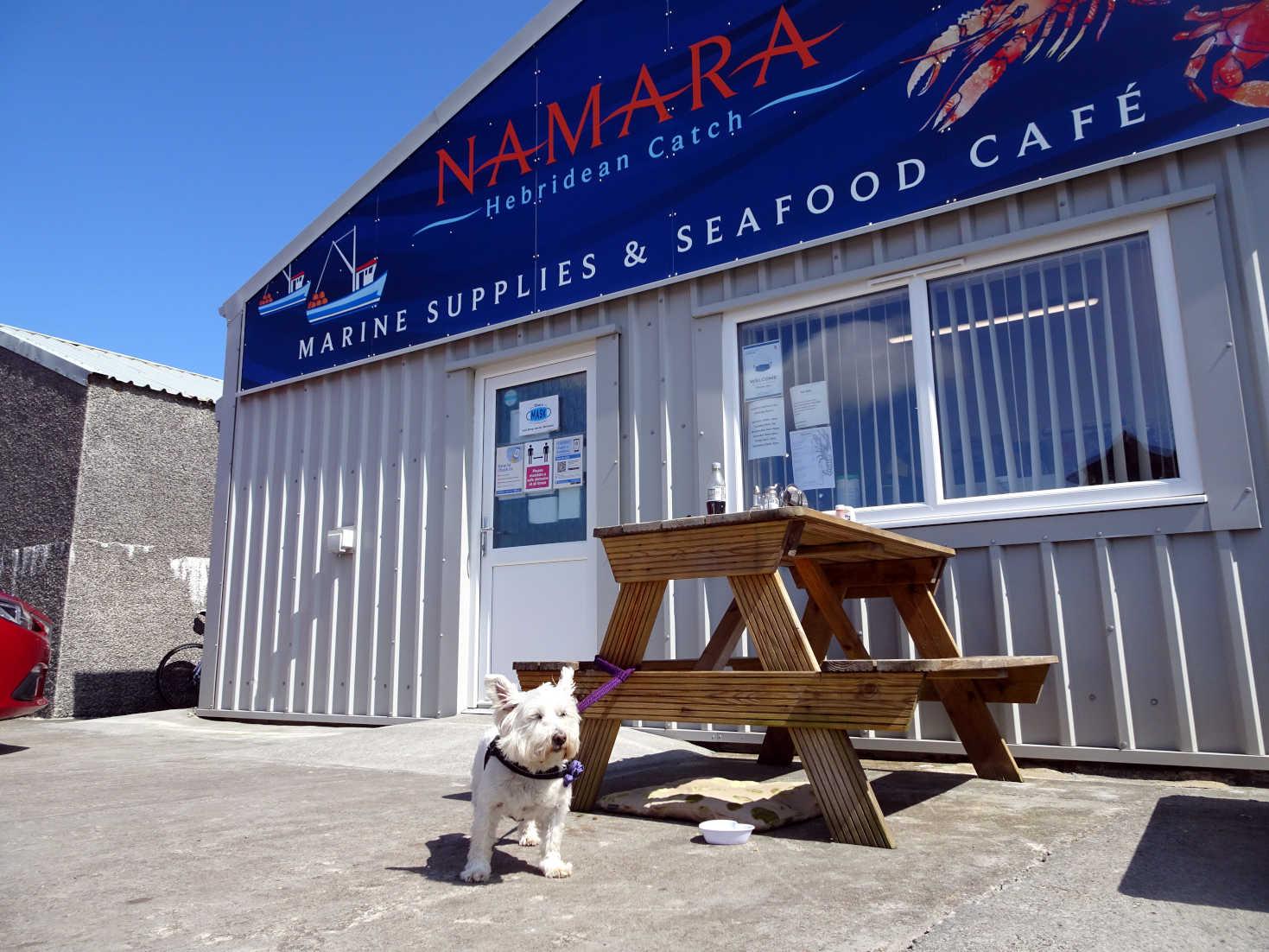 poppy the westie at NAMARA