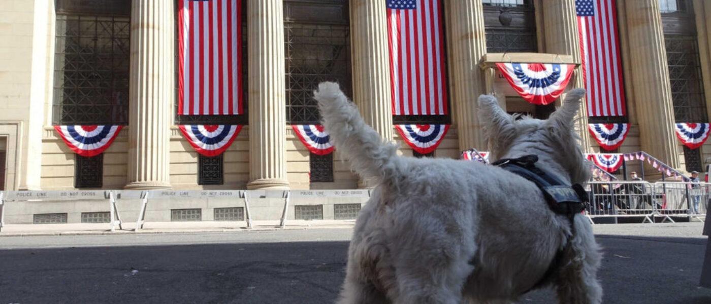 Poppy Goes to America